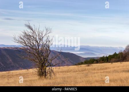 Lonely tree sans les feuilles sur le terrain d'herbe sèche sur les hautes terres de vieille montagne et distant, Misty Mountain couches Banque D'Images