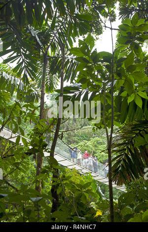 Avis de touristes sur le pont de corde derrière les arbres en forêt tropicale, la Fortuna, Costa Rica, Alajueala Banque D'Images