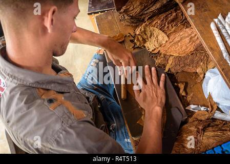 Démonstration de fabrication de cigares faits à la main. Gros plan sur les mains de l'homme guéri et séchées rouler les feuilles de tabac cubain dans une ferme dans la vallée de Vinales, Cuba.