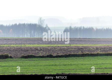 Les forêts d'automne dans le brouillard à l'arrière-plan. Les champs labourés et de vertes prairies, au premier plan. Podlasie, Pologne. Banque D'Images