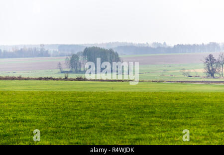 La fin de l'automne. Road et de vertes prairies, au premier plan. Forêt dans la brume matinale dans l'arrière-plan. Podlasie, Pologne. Banque D'Images