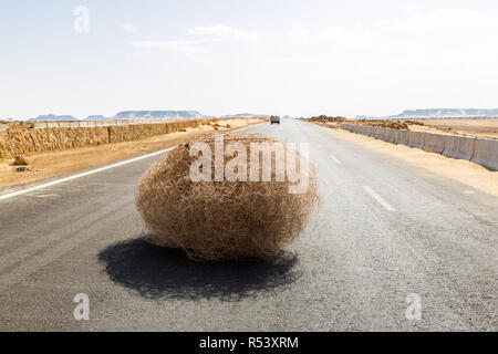 Tumbleweed géant sur l'autoroute avec des dunes de sable, entre el-Bahariya oasis Farafra oasis et al, Désert occidental de l'Égypte. Sahara occidental. Banque D'Images