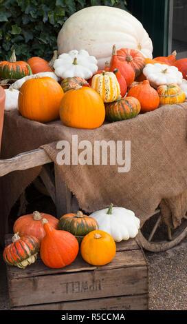 Sur une brouette, courges d'automne coloré beaucoup de variété de légumes Banque D'Images