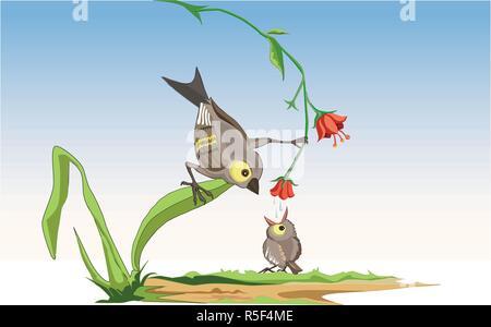 L'alimentation des oiseaux mère mignon direct miel de fleur en baby bird-poussin. Oiseau de mère essayer d'enseigner le bay bird comment s'honeyfrom une fleur. Banque D'Images