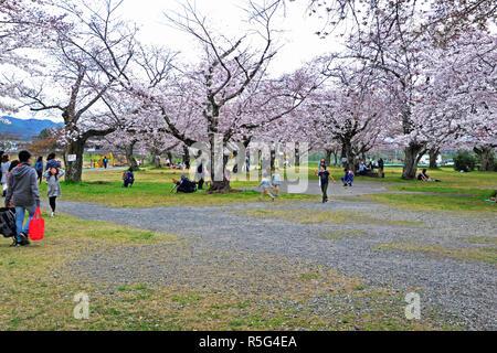 Parc Nakanoshima, Arashiyama, Kyoto, Japon - 6 Avril, 2017: Cherry Blossom Pendant la saison du printemps