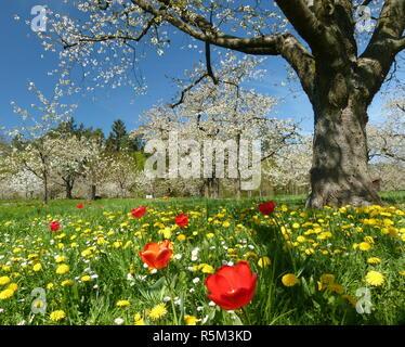 Orchard prairie avec des fleurs Banque D'Images