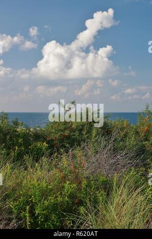 Vue sur les dunes et la mer du Nord à de banjaard,Noord Beveland-,225,sud Pays-Bas Banque D'Images