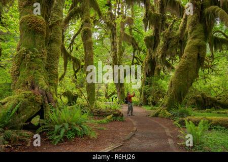 Hall de mousses Trail, Hoh Rainforest, Olympic National Park, Washington. Banque D'Images