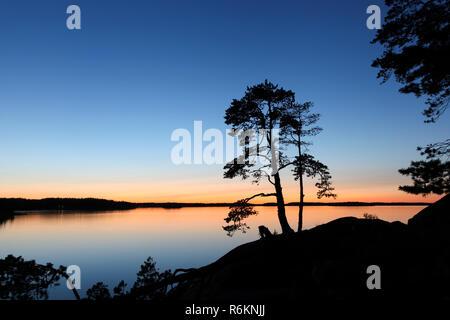 Silhouette d'un petit arbre de pin dans l'archipel de Stockholm