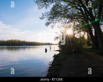 Journée d'été dans le lac Banque D'Images