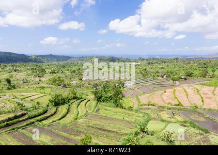 Terrasses de riz, Tirtaganga, Bali, Indonésie Banque D'Images