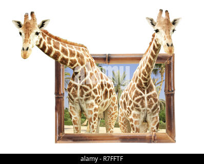 Deux girafes dans cadre en bambou avec effet 3D. Isolé sur fond blanc Banque D'Images