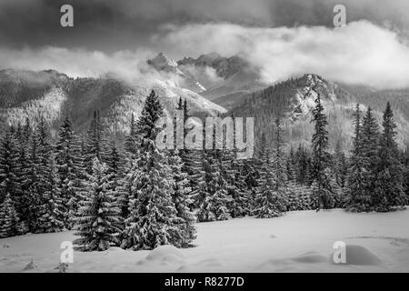 L'hiver dans les montagnes Tatra. Rusinowa Glade. Banque D'Images
