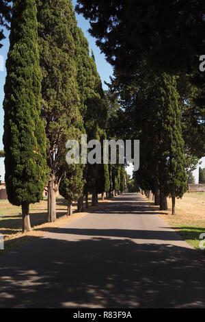 Rangée de cyprès italien sur la célèbre Via Appia Banque D'Images