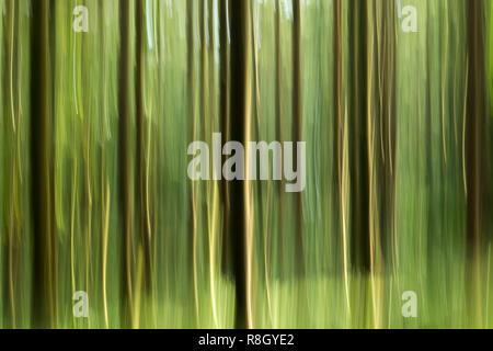 Mouvement de caméra intentionnelle (ICM) photo d'arbres forestiers en abrégé. Tipperary, Irlande Banque D'Images