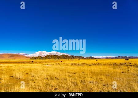 Vue d'un troupeau de vaches dans un pâturage de Mongolie steppe jaune ayant la haute montagne dans l'arrière-plan à l'ouest de la Mongolie Banque D'Images
