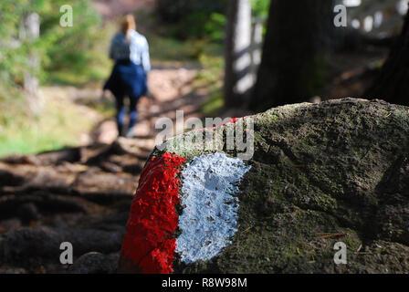 Marque de piste rouge et blanc sur une pierre. Route de la forêt, la randonnée Sentier sentier signe. Haflinger, façon de le 'Wurzer Alm', le Tyrol du Sud, Italie Banque D'Images