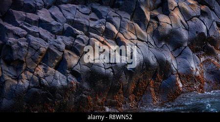 Seascape de basalte, des zones sombres, l'ouest de l'Australie Banque D'Images