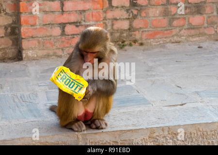 Un singe au temple de Pashupatinath Kathmandou en carton verre jeté de l'alimentation Banque D'Images