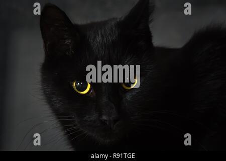 Chat noir se trouve sur une surface en bois naturel,