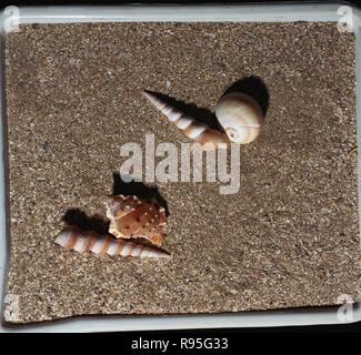 Coquillages sur le sable Banque D'Images