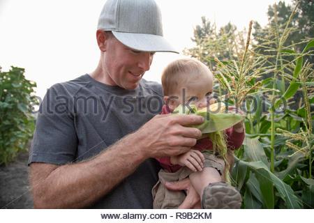 Le père et le petit garçon avec corn cob in rural crop Banque D'Images