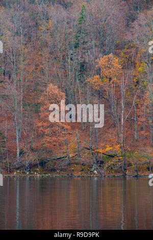 Motif magique woods reflétée sur l'eau dans la journée d'automne, Plitvice Croatie