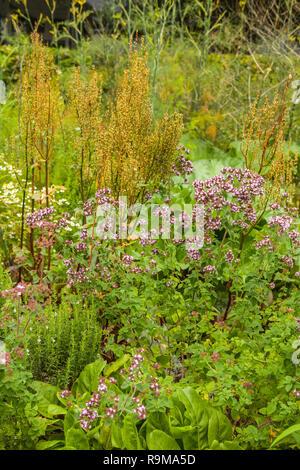 Épices et herbes fraîches dans le jardin d'été Banque D'Images
