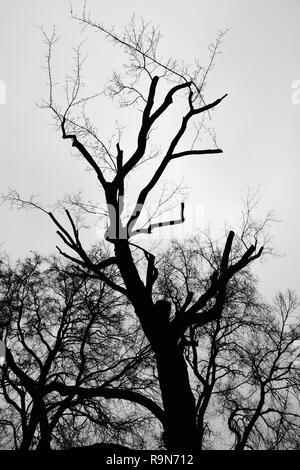Silhouette d'un arbre dans la soirée Banque D'Images