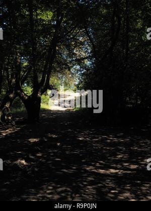 La lumière du soleil pommelé sur un chemin forestier Banque D'Images