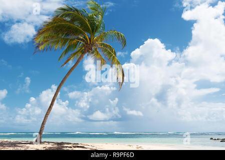 Ciel bleu,coco arbres, l'eau turquoise et le sable doré, Caravelle beach, Sainte Anne, Guadeloupe, French West Indies.