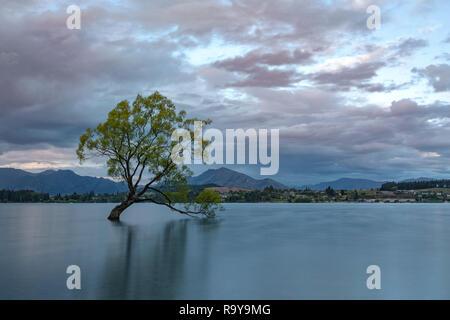 Wanaka, Queenstown, Otago Lakes District, île du Sud, Nouvelle-Zélande