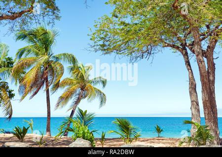 Cocotiers, sable doré, l'eau turquoise et bleu ciel, le Pearl Beach , Guadeloupe, French West Indies