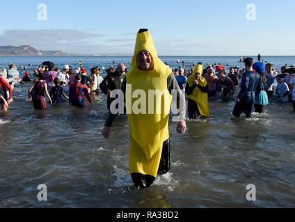 Lyme Regis, dans le Dorset. 1er janvier 2019. Bananes, fente de Lyme, New Years nager, Lyme Regis, dans le Dorset Crédit: Finnbarr Webster/Alamy Live News Banque D'Images