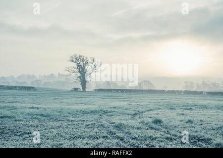 La photographie de paysages brumeux matin d'hiver.sur terrain avec du givre sur l'herbe, des arbres nus et le brouillard en arrière-plan.beau lever de soleil sur la campagne environnante. Banque D'Images