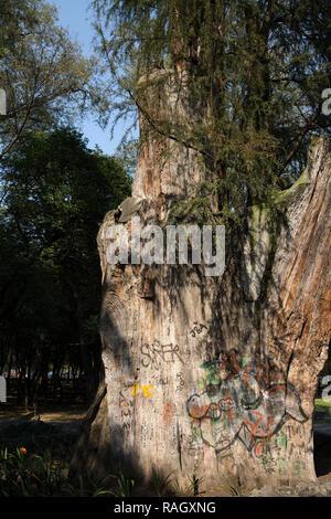 Graffitis sur un tronc d'arbre au parc de Chapultepec à Mexico, Mexique le 25 novembre 2018. Le parc de Chapultepec est le deuxième plus grand parc de la ville de lat Banque D'Images