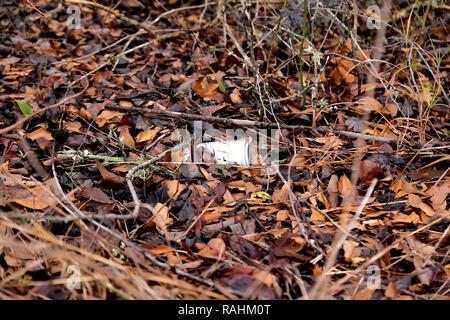 La bière vide pouvez jeté sur le sol au milieu des feuilles dans la nature; la pollution de l'aluminium; corbeille dans la nature. Banque D'Images