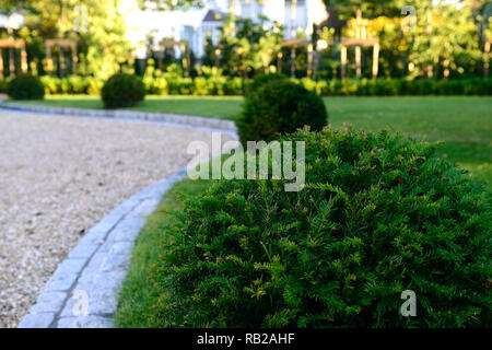 Bordure en pierre,pelouse,lois,herbe,if,boules,jardin,design ...