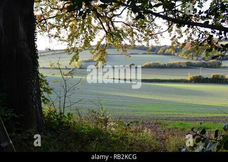 Sentier de vues par Shacklands Road, Shoreham, Kent en automne, à la recherche dans la vallée de la Darent et champs de colline en fin d'après-midi du soleil Banque D'Images