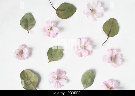 Motif floral féminin. Les feuilles d'eucalyptus à sec et rose fleurs de cerisier japonais sur la vieille table en bois blanc, arrière-plan. Mise à plat, vue du dessus.