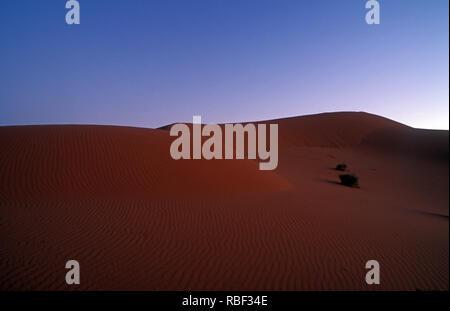E désert de Simpson est un grand domaine de la plaine de sable rouge, sec et des dunes dans le Territoire du Nord, Australie du Sud et du Queensland en Australie centrale Banque D'Images