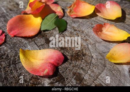 Pétales de rose en forme de cœur sur un tronc d'arbre Banque D'Images