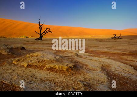 Sel Sossusvlei poêle avec des dunes de sable rouge dans le désert de Namib, Namibie, Afrique.