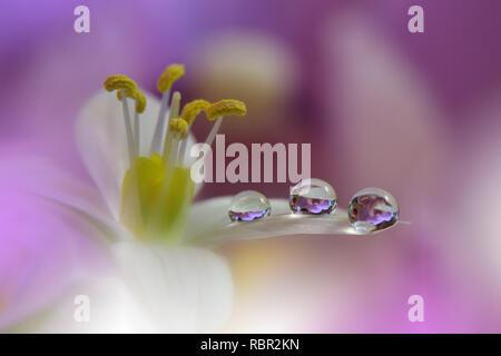 Incroyablement belle nature.Art photography.dessin de fantaisie.Creative Background.Amazing fleurs colorées.Web Banner.Vous détendre.Conceptual image abstraite. Banque D'Images