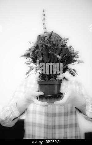 Résumé image de femme tenant en mains en face de la tête en fleurs fraîches Schlumbergera truncata savons aussi que Thanksgiving cactus Banque D'Images