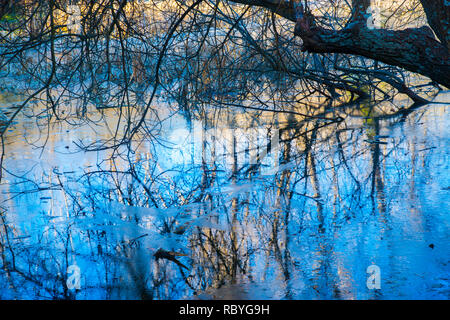 Réflexions sur l'eau gelée. Finnish Forest, Salamanque, Espagne, province de Madrid.