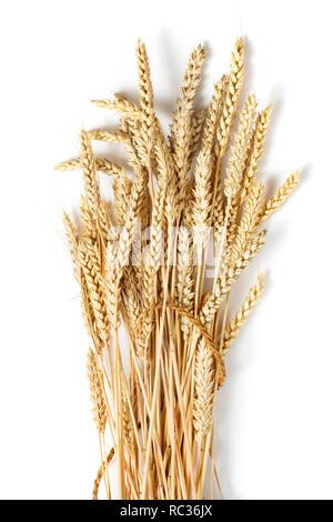 Gerbe d'épis de blé d'or mûrs isolé sur fond blanc Banque D'Images