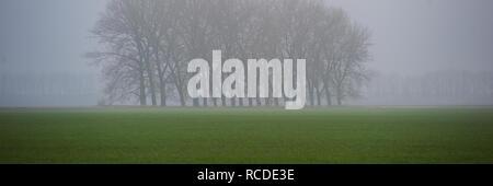 Groupe d'arbres dans le centre d'un champ agricole du blé d'hiver, matin brumeux. Saison d'automne. Bandeau Web. Banque D'Images