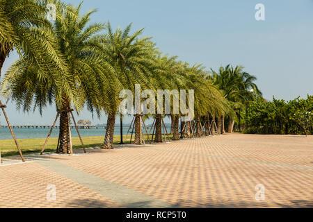 Allée de palmiers sur la côte du Golfe de Siam, Thaïlande
