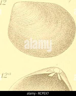 . Die antarktischen Schnecken und Muscheln. Mollusques. ll 15 13. M. Veuillez noter que ces images sont extraites de la page numérisée des images qui peuvent avoir été retouchées numériquement pour plus de lisibilité - coloration et l'aspect de ces illustrations ne peut pas parfaitement ressembler à l'œuvre originale.. Thiele, Johannes, 1860-1935; Deutsche Südpolar-Expedition (1901-1903). Berlin: G. Reimer